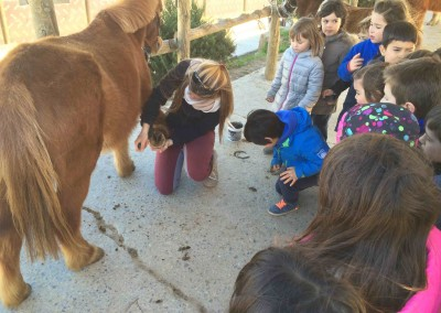 visitas escolares hipica sant cugat