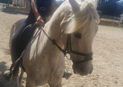 3a semana Campus equitacion Can Caldes (149)