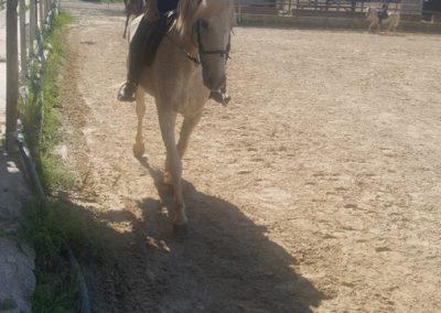 3a semana Campus equitacion Can Caldes (150)