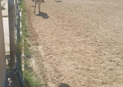 3a semana Campus equitacion Can Caldes (171)