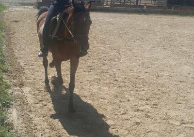3a semana Campus equitacion Can Caldes (173)