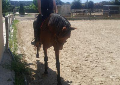 3a semana Campus equitacion Can Caldes (182)