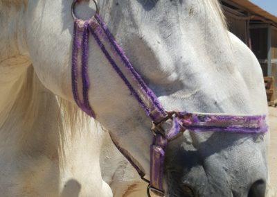 3a semana Campus equitacion Can Caldes (294)